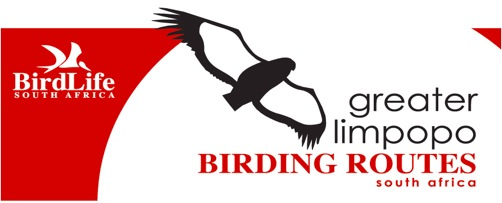 CLICK HERE: Limpopo Birding Routes off the beaten track event to the Blouberg and Makgabeng